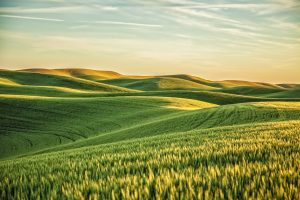 Rolling Hills of the Palouse near Moscow and Pullman